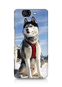 Amez designer printed 3d premium high quality back case cover for Micromax Canvas Knight A350 (Husky Dog Alaska Snow)