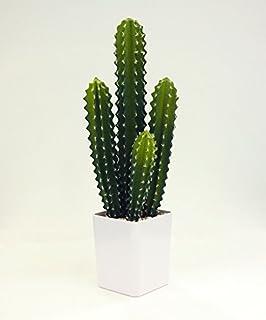 サボテンは部屋をおしゃれに演出してくれる観葉植物