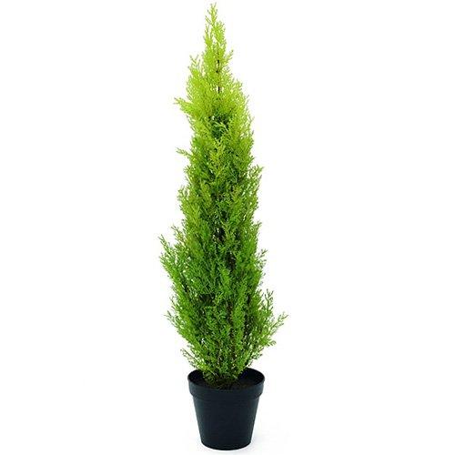 europalms-82606962-planta-ornamental-cypress-leyland-90-cm-verdes-grun