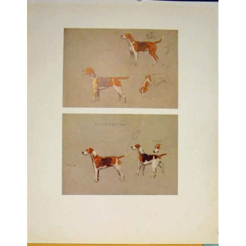 Hound Dog Diagram Sketch Drawing Fine Art Color Print