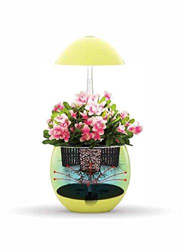 123wegrow Hydroponic Indoor Garden System Led Lights Automatic Grow Herbs Grow Vegetables