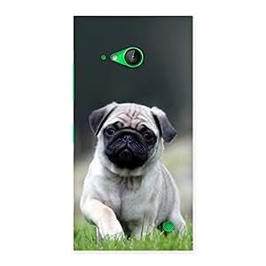 Ajay Enterprises Elite Cuty Pug Dog Grass Back Case Cover for Lumia 730
