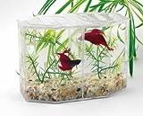Betta Hex Dual Mini Tank Kit (Catalog Category: Aquarium / Plastic Fish Bowls)