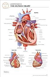 11 x 17 Post-It Anatomical Chart: HUMAN HEART