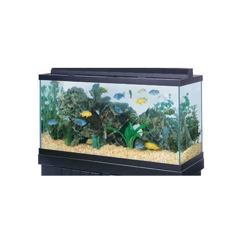 Pet Supplies : Pet Care Products : All Glass Aquarium Co. 75 Gallon ...