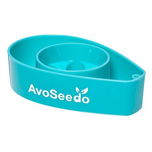 avoseedo-grow-your-own-avocado-tree-blue