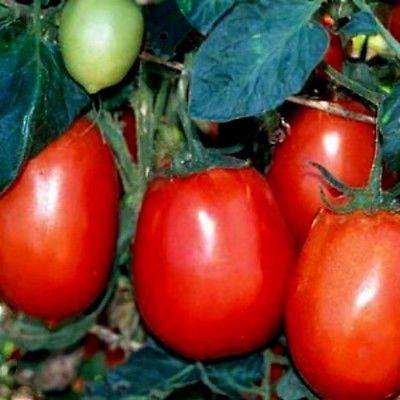 50+ Heirloom Vegetable Seeds - Tomato -