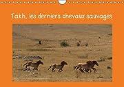 Takh, les Derniers Chevaux Sauvages: Nom Mongol de ce Cheval Originaire d\\\'asie Centrale (Calvendo Animaux)