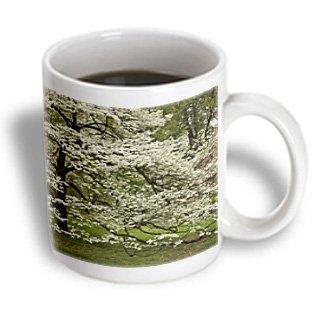 Danita Delimont - Trees - Dogwood Tree, Audubon Park, Louisville, Kentucky, Usa - Us18 Aje0523 - Adam Jones - 15Oz Mug (Mug_144428_2)