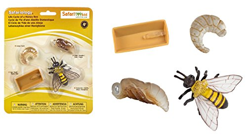 Set Ciclo della vita dell'ape Safari ltd cod. 622716