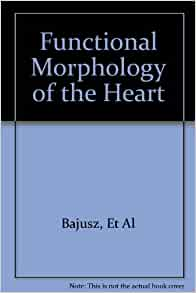 morphology of the heart Organs such as the stomach, lungs, heart, bladder and kidneys can be seen on a morphology ultrasound additionally, this scan allows doctors to do complete measurements of the veins and arteries in the baby's brain and heart.