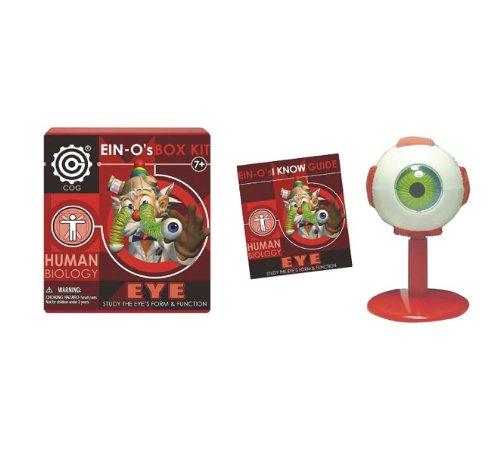 eino-eye-model