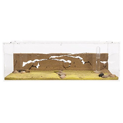 sand-ant-farm-big-with-free-ants-and-queen-formicarium