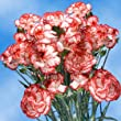 160 Mini Carnations Christmas Color Spray Wholesale