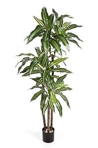 Plante vivace dracaena fragrans artificiel en pot 80 for Plante vivace verte