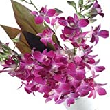 Little India Natural Purple Orchids Flower Gift (Bunch Of 12)