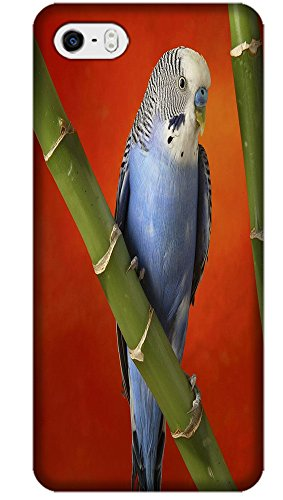 Fantastic Fay Apple Accessories Happy Colorful Mother Childern Parrot Fly The Tree Special Design Cell Phone Cases Covers For iPhone 5C No.7