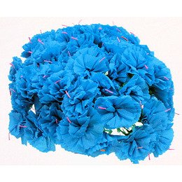 Turquoise Carnations