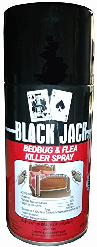 Blackjack bugs