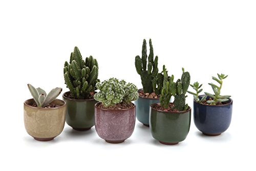 T4U 2.5 Inch Ceramic Ice Crack Zisha Raised Serial Sucuulent Plant Pot/Cactus Plant Pot Flower Pot/Container/Planter Full colors Package 1 Pack of 6 (Succulent Plants In Pots compare prices)