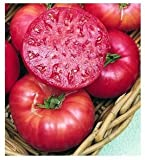 75+ Mortgage Lifter Tomato Seeds- Heirloom Variety