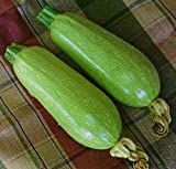 Just Seed Courgette - Clarion F1 - 50 Seeds