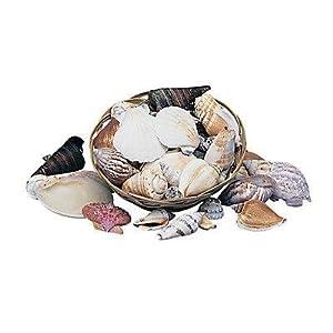 Genuine Shells Basket