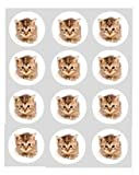 12 Kitten Tabby cat rice paper fairy cup cake 40mm toppers pre cut decoration