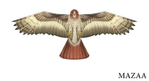 Birds of Prey Kite - Hawk