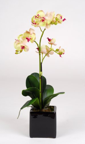 "Artificial 17"" Mini Phalaenopsis Orchid, Green"