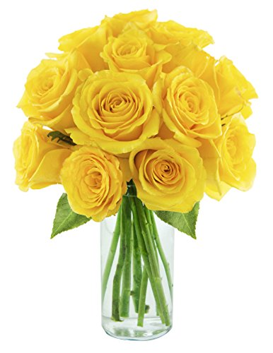 yellow-roses-of-texas-one-dozen-long-stemmed-roses-with-vase