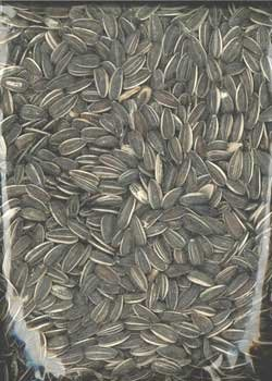 Image of 1 PK Sunflower Striped 40lb (B00944HD76)