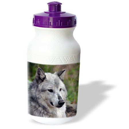 Wb_45348_1 Whiteoak Photography Wolves - Grey Wolf Posing - Water Bottles