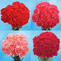 200 Fresh Cut Valentine\'s Carnations | Fresh Flowers Express Delivery | Perfect Valentine\'s Day Gift