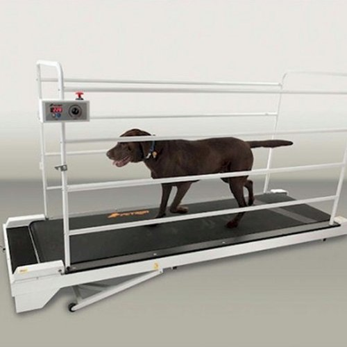 The best dog treadmill reviews