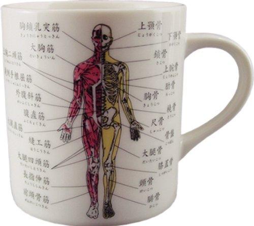 お茶を飲んでるだけなのになんだか頭が良くなるマグカップ 人体 マグカップ DM2575