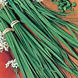 GARLIC / CHINESE CHIVES - 300 SEEDS - ORGANIC