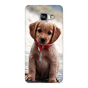Special Looking Puppy Multicolor Back Case Cover for Galaxy A3 2016