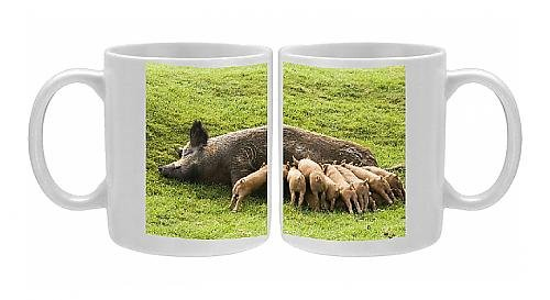 Photo Mug Of Iron Age Pig - With Large Litter Of Suckling Piglets From Ardea Wildlife Pets