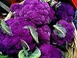 紫色カリフラワー 40粒