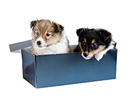 Wallmonkeys WM107141 Little Puppy Sheltie in a Gift Box Peel and Stick Wall Decals (24 in W x 18 in H)