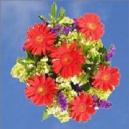 Specials Valentine\'s Day Bouquets