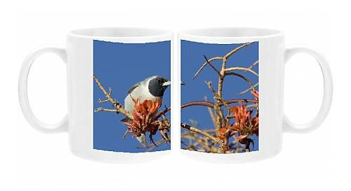 Photo Mug Of Dh-4562 Masked Woodswallow