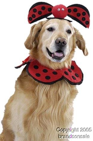 Pet Lady Bug Dog Halloween Costume For Large