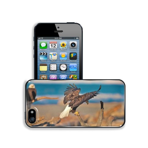 Eagles Birds Branches Sit Swing Wings Predators Apple Iphone 5 / 5S Snap Cover Premium Leather Design Back Plate Case Customized Made To Order Support Ready 5 Inch (126Mm) X 2 3/8 Inch (61Mm) X 3/8 Inch (10Mm) Liil Iphone_5 5S Professional Case Touch Acce front-907224