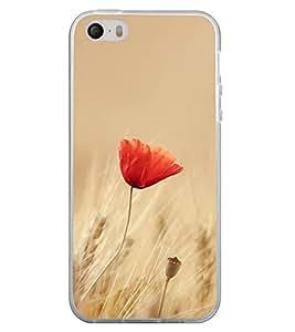 Orange Flower 2D Hard Polycarbonate Designer Back Case Cover for Apple iPhone 4