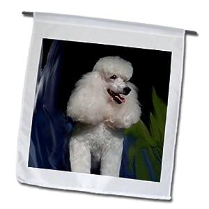 3dRose fl_4816_1 Miniature Poodle Garden Flag, 12 by 18-Inch