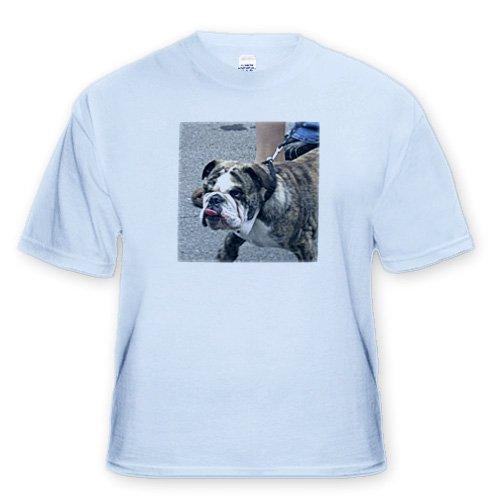 Bull dog - Adult Light-Blue-T-Shirt 4XL