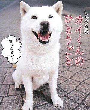 しゃべる犬 カイくんのひとりごと