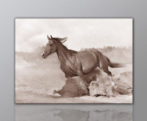 WILD Leinwandbild Bilder Pferd Pferdebild (horse2 50x70cm) Hengst Pferde auf Leinwand gerahmt - Bilder fertig gerahmt mit Keilrahmen riesig. Ausführung Kunstdruck auf Leinwand. Günstig inkl Rahmen